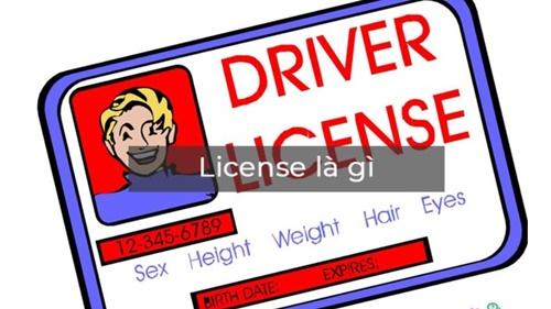 license là gì